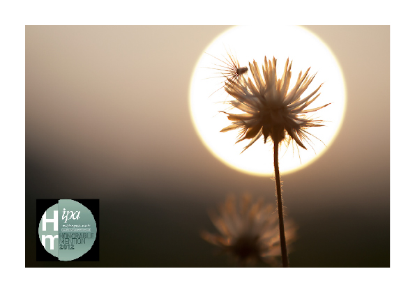 IPA 2012 - Honorable Mention (Nature-Flowers) Sanjitpaal Singh
